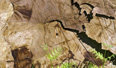 Déssouchage d'arbres à Rochefort du Gard